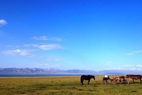 Caii nomazilor lăsați liberi.