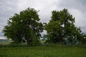 Urșița_3_1